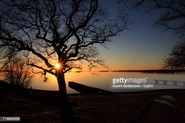 Silhouette Bare Tree By Calm Lake At Sunset