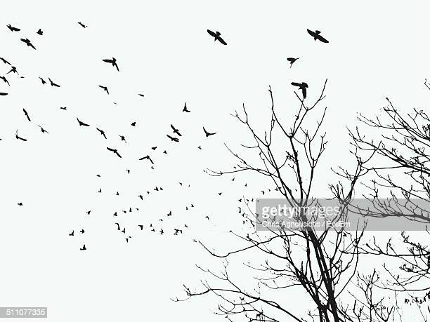 Silhouette bare trees and birds against clear sky