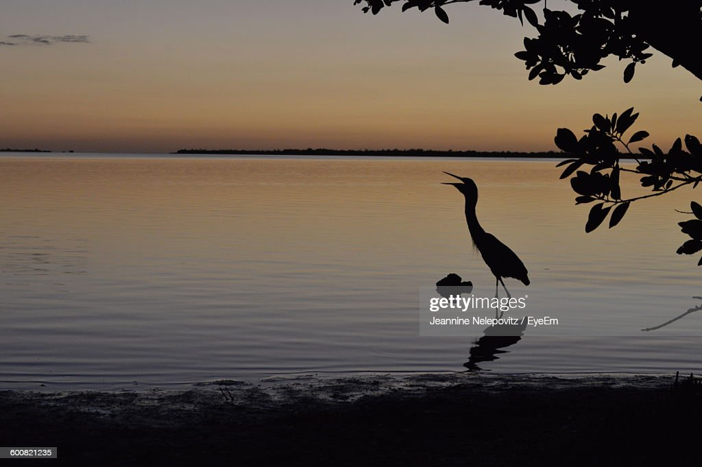 Silhouette Bird At Beach Against Sky During Sunset
