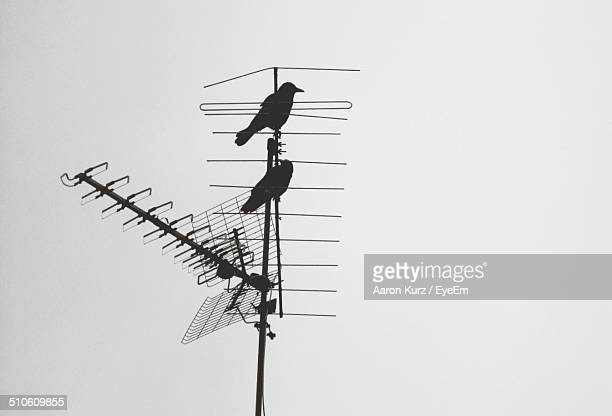 Silhouette birds on television aerial against clear sky