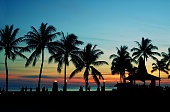 Silhouette Coconut Palm Tree On Beach