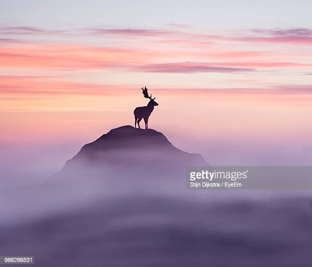 Silhouette Deer Standing On Rock Against Sky During Sunset