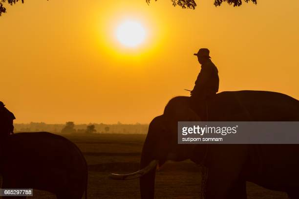 Silhouette elephant and mahout