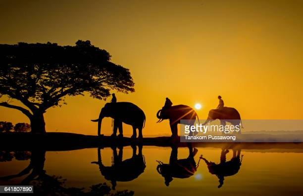 Silhouette elephant on the background of sunset