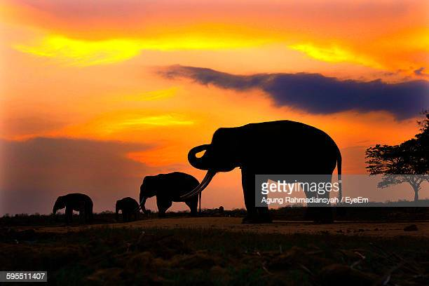 Silhouette Elephants On Field At Way Kambas National Park Against Orange Sky