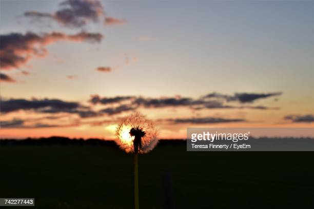 Silhouette Flower On Field Against Sky During Sunset