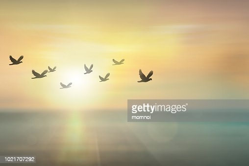 Silhouette free birds flying together in the  sunset sky. : Foto stock