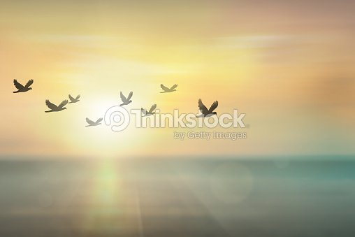 Silhouette free birds flying together in the  sunset sky. : Stock Photo