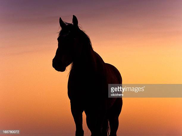 Silhouette Horse at Sunset in Texas