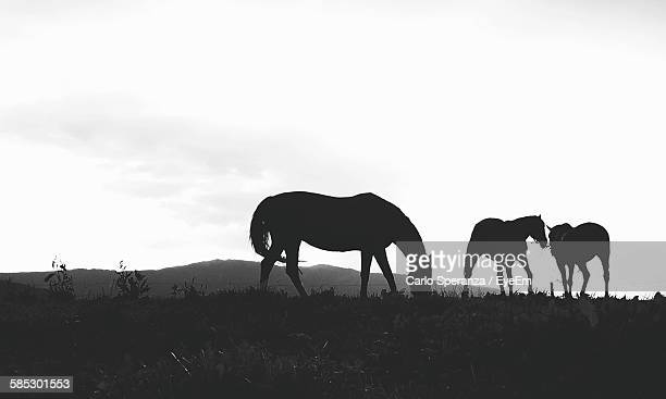 Silhouette Horses On Field Against Sky