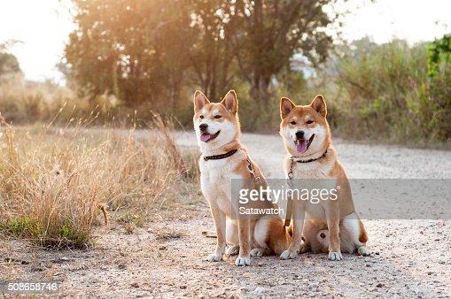 Silhouette loving dog couple : Stock Photo