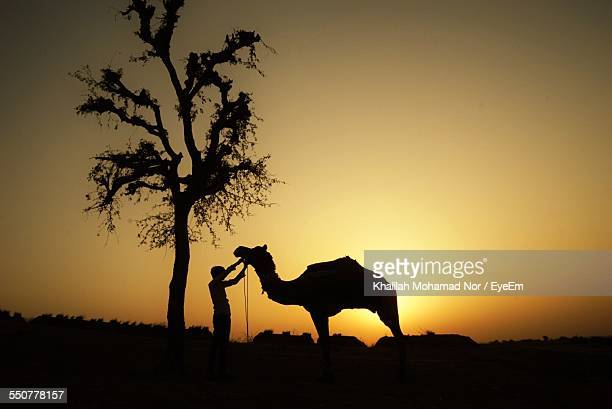 Silhouette Man And Camel On Field Against Clear Sky During Sunset