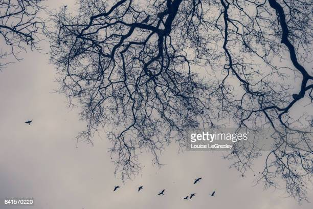 Silhouette of a bare tree with a flock of birds flying by
