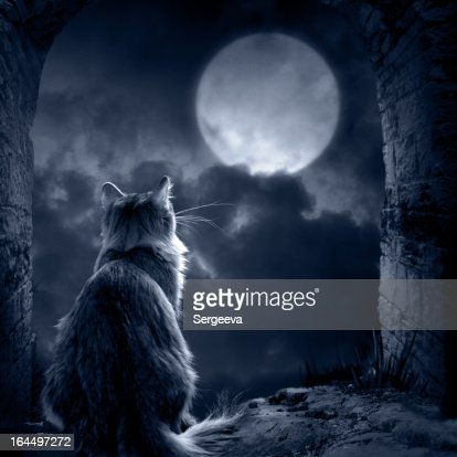 Silhouette of a cat in the moonlight