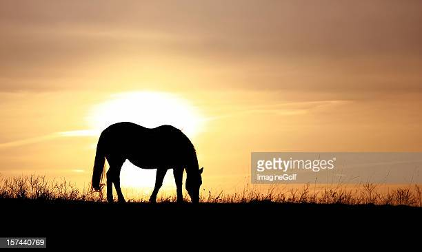 Silhouette of a Horse Grazing on a Pasture