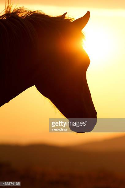 Silhouette of a horse's head against the sunset