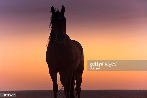 Silhouette of a Texas Horse at Sunset