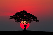 Silhouette of a tree and meadow with sunset