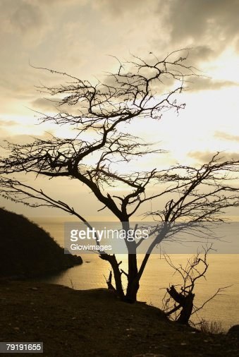 Silhouette of a tree at sunset, Taganga Bay, Departamento De Magdalena, Colombia : Foto de stock
