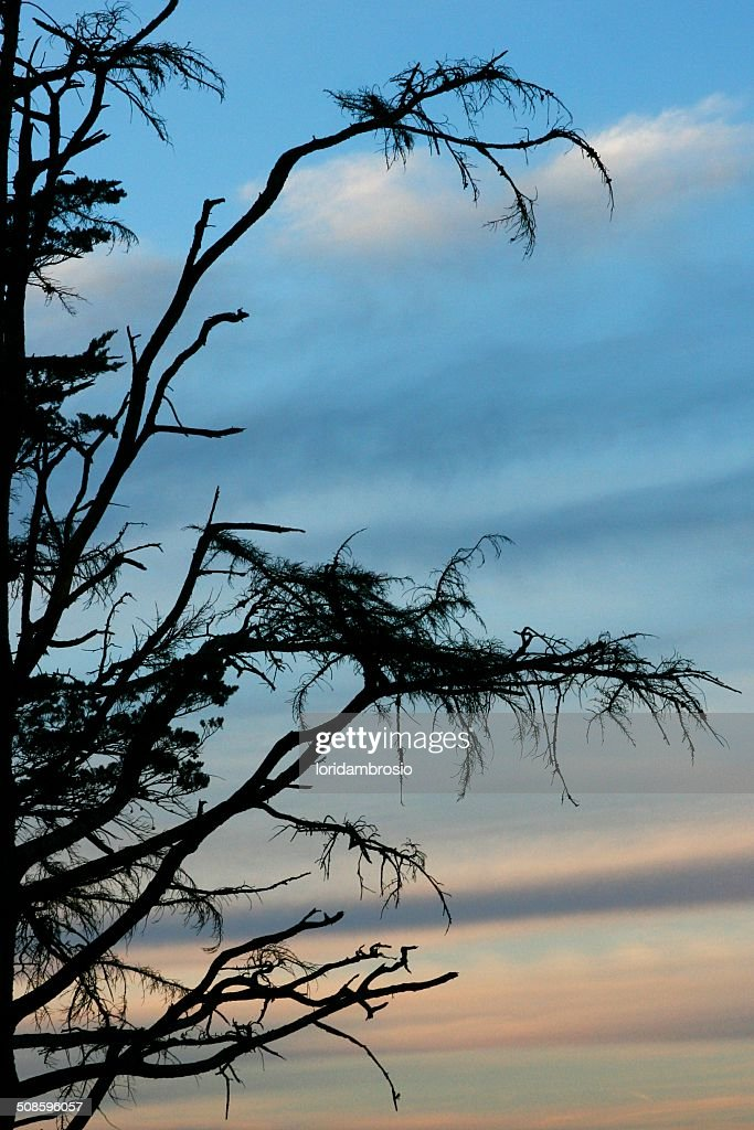 Silhouette of a tree with a blue and pink sky : Stock Photo