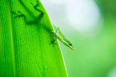 Silhouette of anole lizard on leaf
