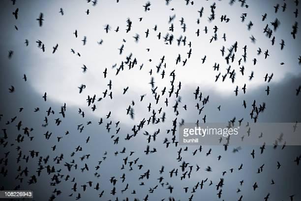 Silhouette Vögel in Scharen bedecken Himmel