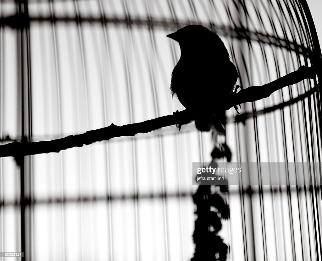 silhouette of bird in cage