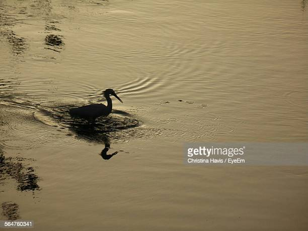 Silhouette Of Bird On River