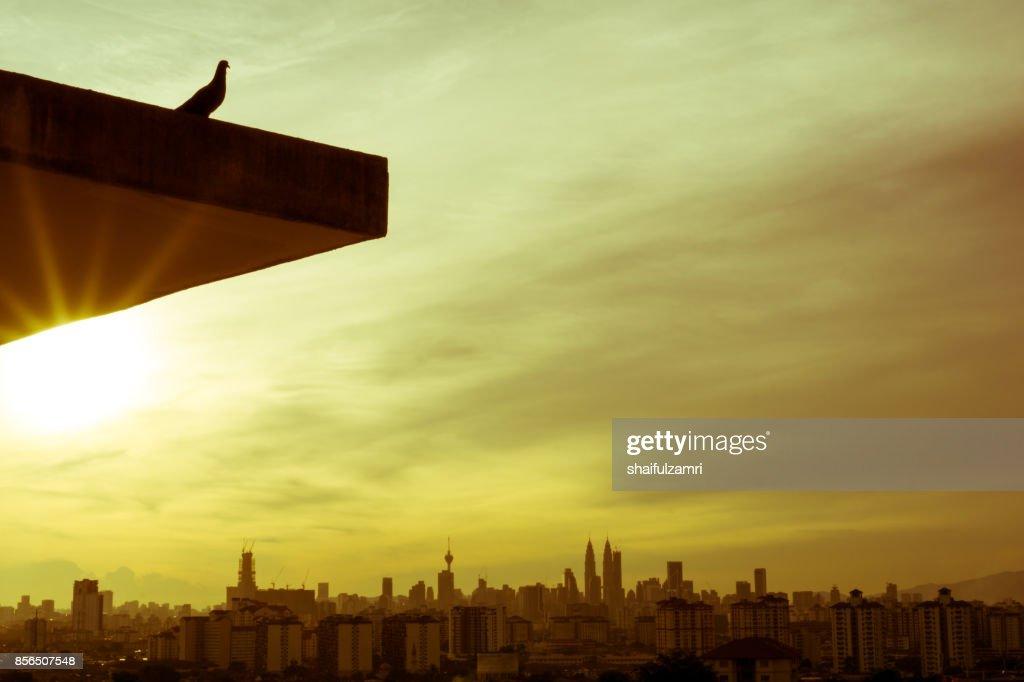 Silhouette of bird over downtown Kuala Lumpur, Malaysia : Stock Photo