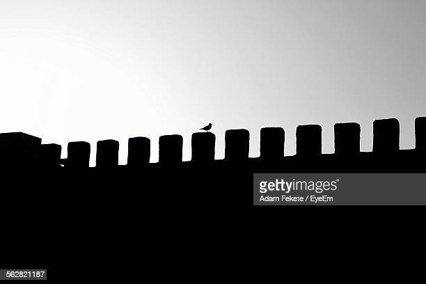 Silhouette Of Bird Perching On Fortified Wall