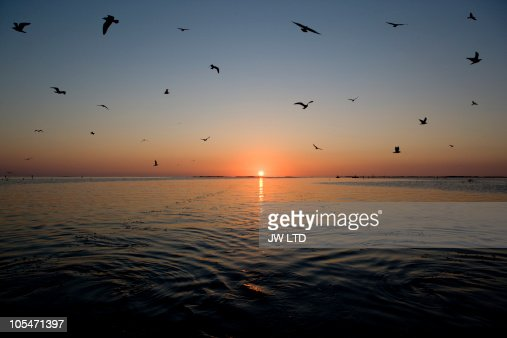Silhouette of birds flying over sea at sunrise : Stock Photo