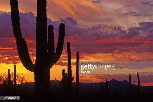 cactus et le coucher de soleil