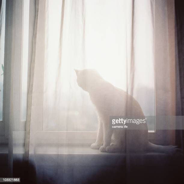 Silhouette of cat