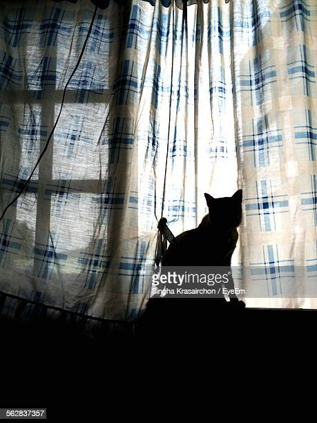 Silhouette Of Cat Sitting On Window Sill