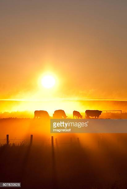silhouette of cattle walking across the plans in sunset