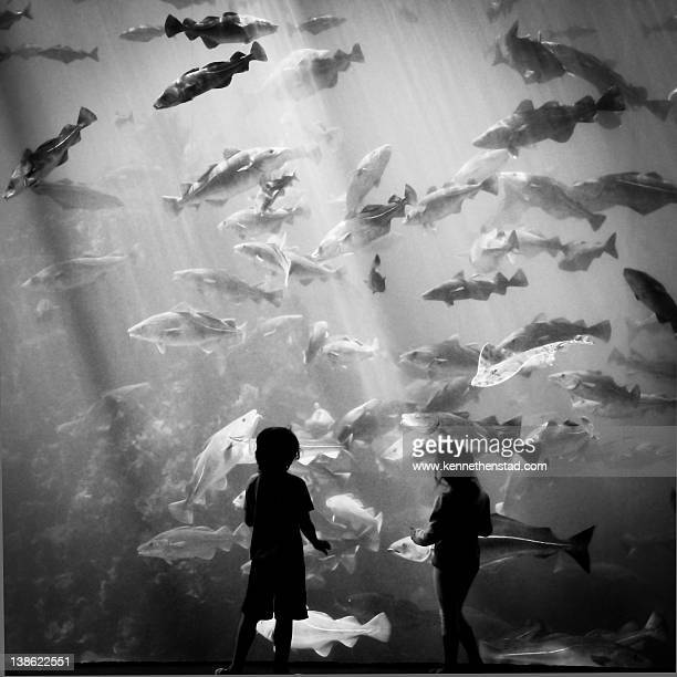 Silhouette of children watching fish in aquarium