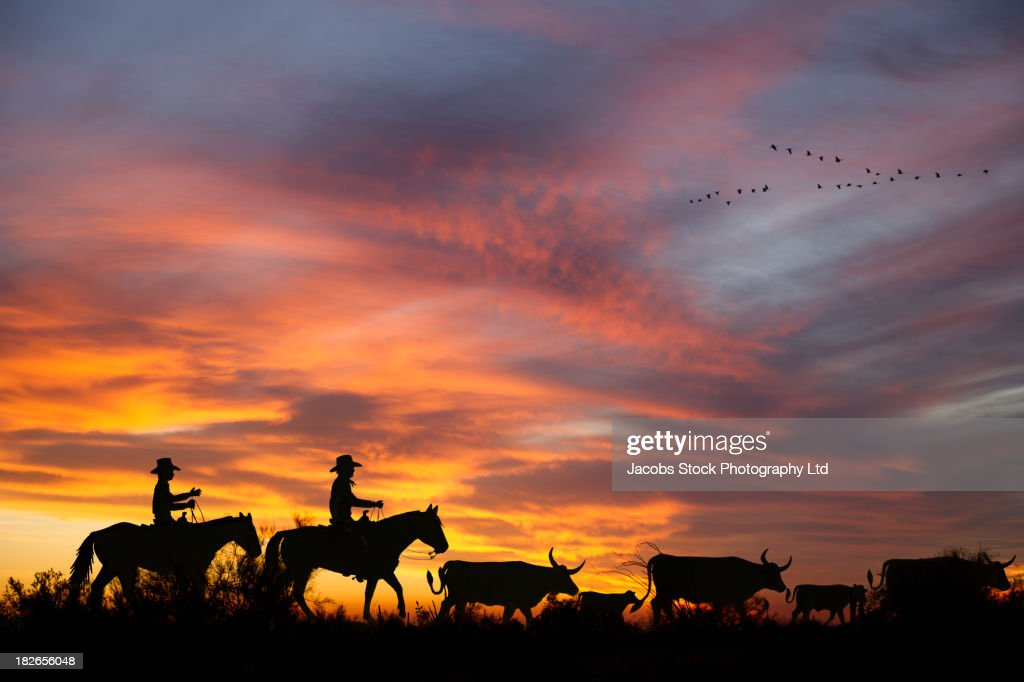Silhouette of cowboys herding steer, Boise, Idaho, United States