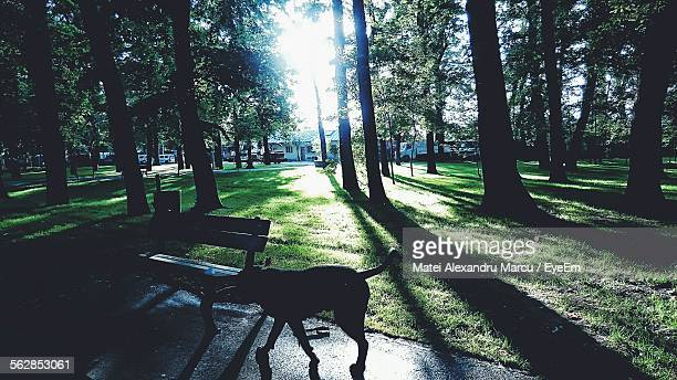 Silhouette Of Dog In Park
