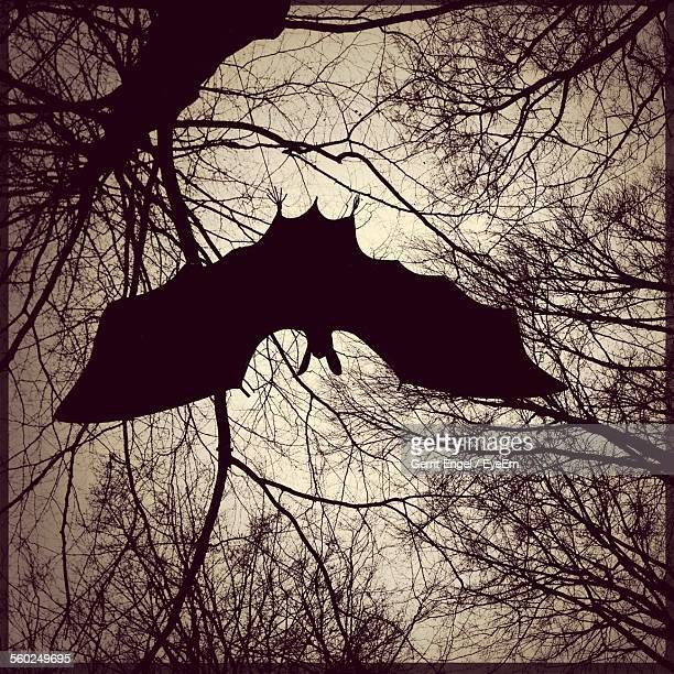 Silhouette Of Flying Bat