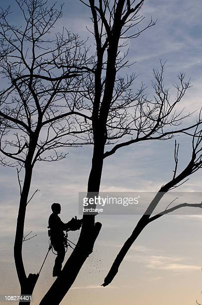 Silhouette of Forestry Worker Cutting off Tree Limbs