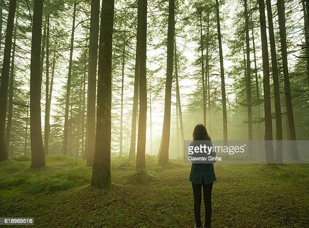 Silhouette of girl standing alone in pine forest at twilight.