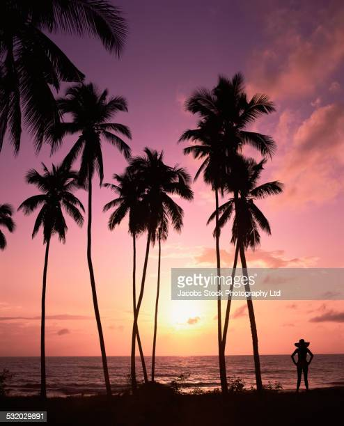 Silhouette of Hispanic woman standing under palm trees on tropical beach