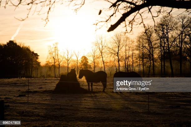 Silhouette Of Horses Grazing During Sunset