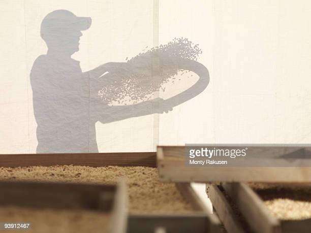 Silhouette Of Man With Coffee Beans