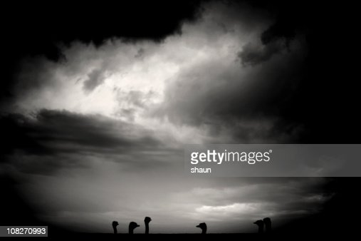 Silhouette of Ostrich Heads Behind Wall, Black and White : Stock Photo