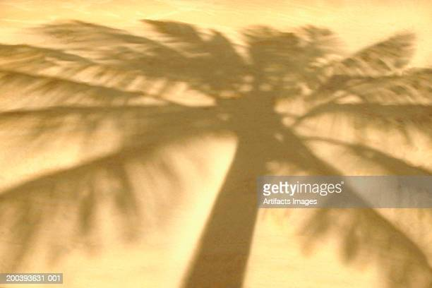 Silhouette of palm tree in sand