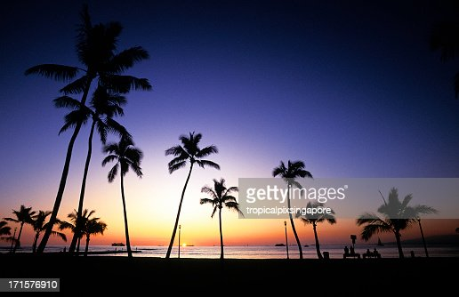 Silhouette of palm trees at sunset in Oahu, Hawaii