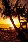 Silhouette of palm trees on a beach, Waikoloa Beach, Hawaii, USA