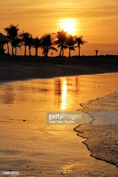 Silhouette Of Palm Trees On Beach During Sunset