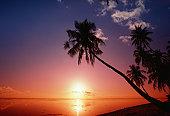 Silhouette of palm trees, Tahiti